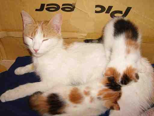 Cat Mom 6