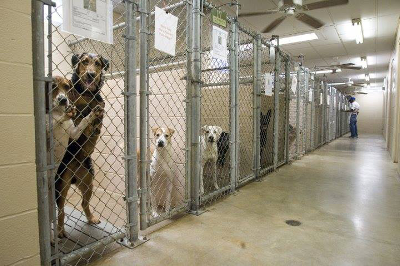 dogs waiting in shelter